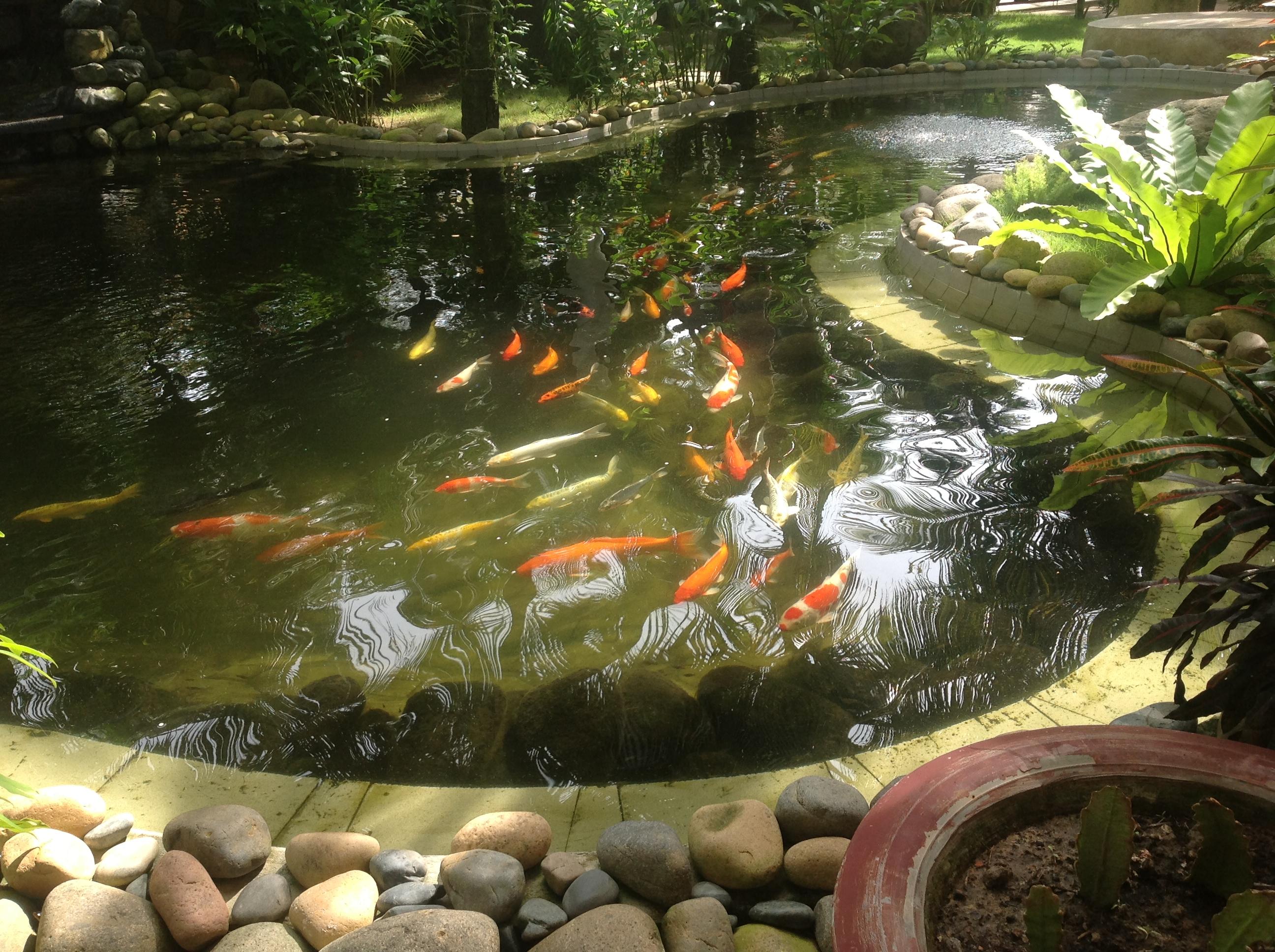 Cách điều chỉnh pH trong hồ cá